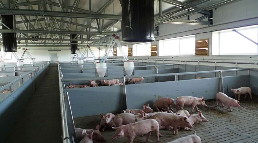 pig farms steel buildings metal frame halls